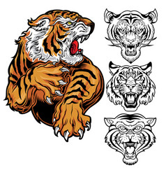 Animals angry tiger drawing head tiger vector