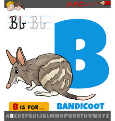 Letter b from alphabet with cartoon bandicoot vector
