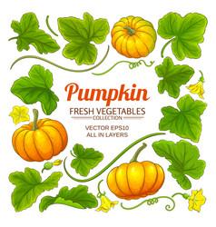 pumpkin elements set vector image