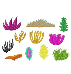 coral set design vector image vector image
