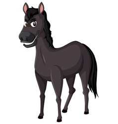 a black horse on white background vector image