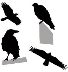 flying sitting crow vector image