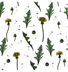 seamless dandelions with vector image