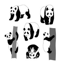 set graphic panda vector image