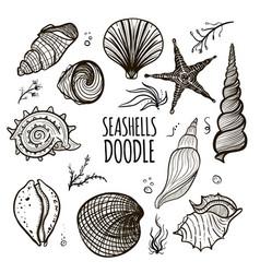set of seashells on white background vector image