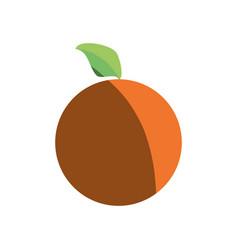 orange healthy food shadow vector image vector image