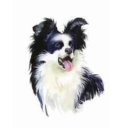 Border Collie Animal dog watercolor vector image