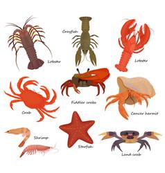 Crustacean crab prawns ocean lobster and vector