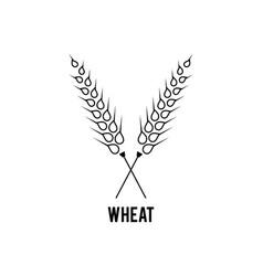 Grain wheat logo concept agriculture wheat logo vector