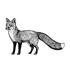 Hand drawn fox black white sketch vector