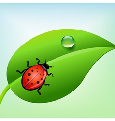 ladybug on a green leaf vector image