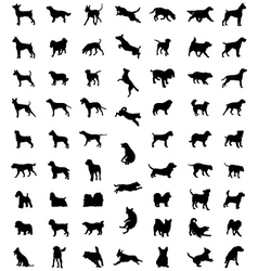 Races of dogs vector