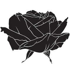 Rose lush vector