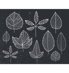 set of hand drawn tree leaves - white vector image