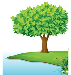 A tree near the body of water vector