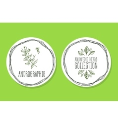 Ayurvedic Herb - Product Label with Andrographis vector