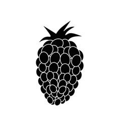 Fresh blackberry fruit vector