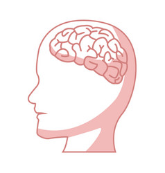 Human head with brain part organ anatomy vector