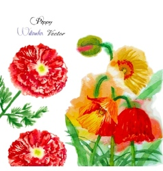 Watercolor background with red poppy-04 vector image