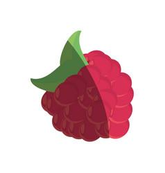 raspberry fruit fresh shadow vector image vector image