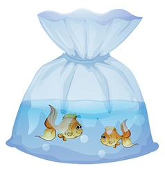 A plastic pouch with two fishes vector image