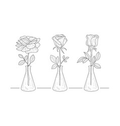 blooming rose flowers in glass vase hand drawn vector image