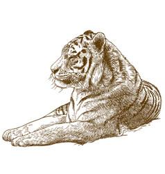 Engraving drawing of siberian tiger amur tiger vector