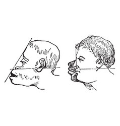 Facial angles is an angle vintage engraving vector