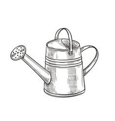 garden metal watering can vector image