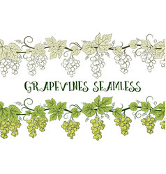 grape seamless ornament vector image