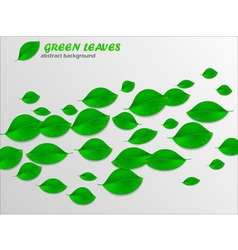 Realistic green leaves abstract background Ecology vector image