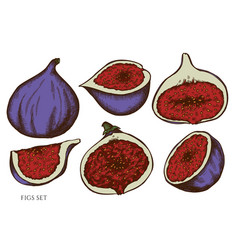 set hand drawn colored fig vector image