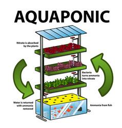 Aquaponic system vector