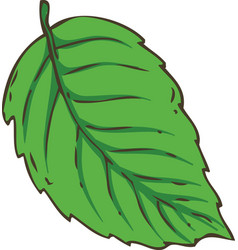 Fresh green mint leaf vector