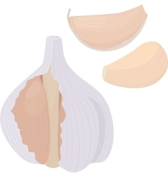 garlic and bulb on white background vector image