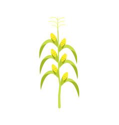 corn on stalk icon vector image