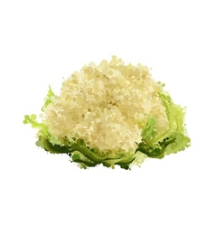 Cauliflower of blots vector