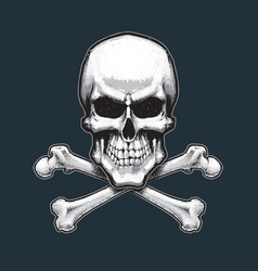 Pirates skull and bones vector