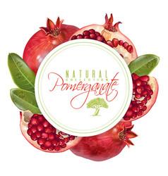 Pomegranate round banner vector