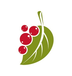 Single flat green leaf with berries or seeds vector