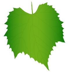 Green grape leaf vector image