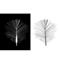 Black and White Bird Feather Drawn in vector image vector image