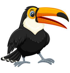 A toucan on white background vector