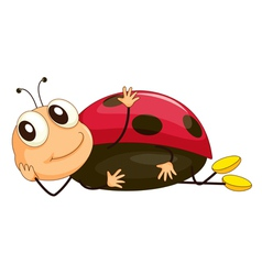 Cartoon ladybird vector image