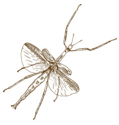 Engraving drawing of stick mantis vector