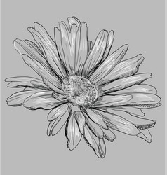 grey flower 3 vector image