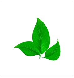 Realistic green leaves Ecology concept vector image