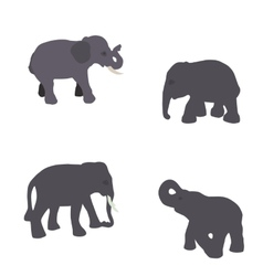 Set of Elephant Isolated on White Background Eps10 vector image
