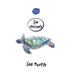 sea turtle watercolor vector image vector image