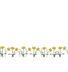 seamless border isolated buttercup vector image
